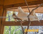 Птичник гостевого дома «Розарий»