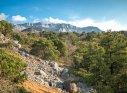 Крым, Симеиз, можжевеловая роща, вид на Ай-Петри