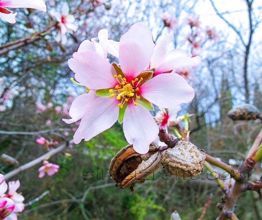 Крым, Симеиз, весна