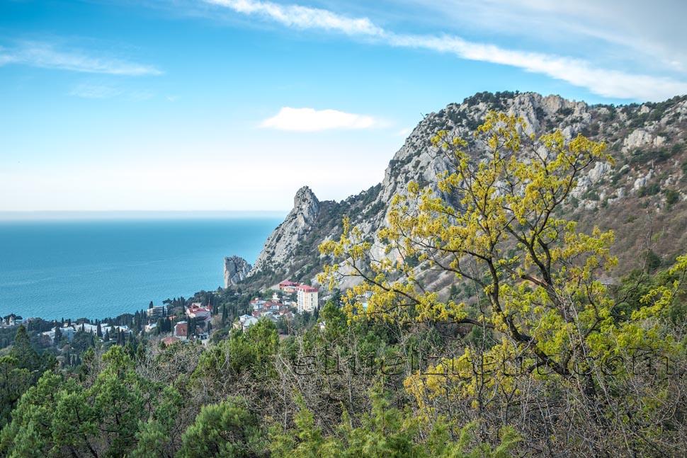 Крым, Симеиз, гора Кошка, можжевеловая роща
